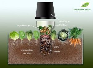 How to Build a Worm Tower - This visually illustrates the concept of building a worm farm in your raised garden bed, where you want your compost worms to go to work for you, feeding your vegetables with nutrients. This system allows you to recycle food scraps back into your soil. PVC is NOT safe to use as it leaches chemicals which can end up in your food - I recommend clay pipes or food grade plastic buckets with recycle numbers 1, 2, 4 or 5 (not 3, 6 or 7).   The Micro Gardener