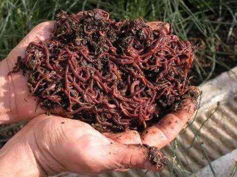 3868 best images about zaaien en planten on pinterest for Como hacer un criadero de cachamas