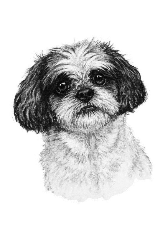 Shih Tzu Dog Wall Art Print Modern Home Decor Black White Dog Lover Gift Modern Home Pet Art Cha Dog Print Art Dog Art Dog Artwork