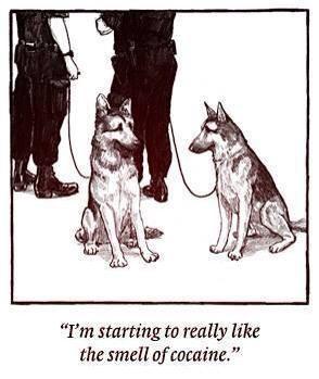 Drug sniffing dogs...