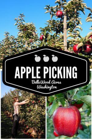 Experience the best of fall with an afternoon of apple picking, gin tasting and sweet treats at the picturesque BelleWood Acres in Bellingham, Washington! Read more at http://www.liverecklessly.com