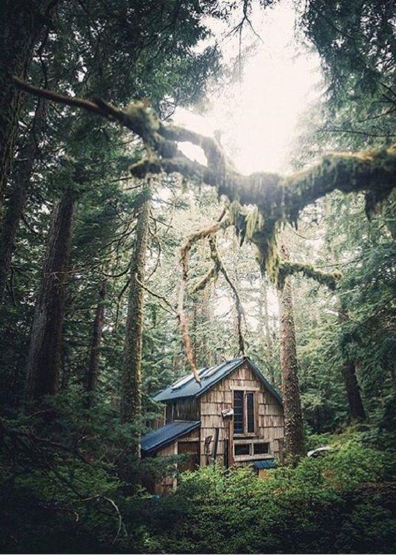 Домики  в лесной глуши для уединения и отдыха от шумной городской жизни :) Природа, лес, глушь, дом, длиннопост