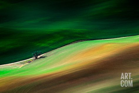 Lonely Tree Photographic Print by Ursula Abresch at Art.com