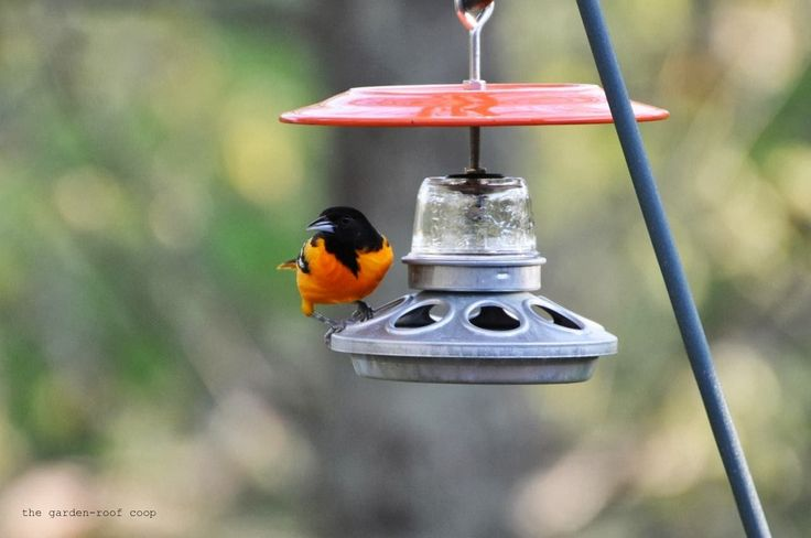 1000 images about diy bird feeders and outdoor decor on for Baltimore glassware decorators
