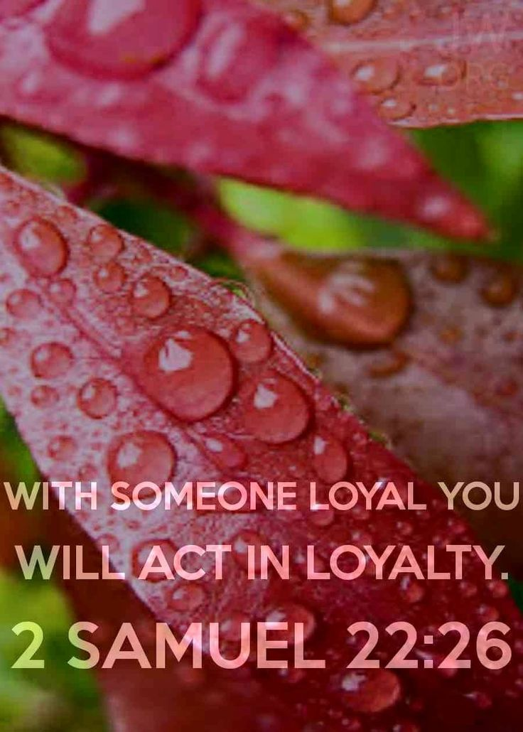 """""""With someone loyal you will act in loyalty.""""---2 Samuel 22:26 Monday, April 20/15 www.jw.org"""