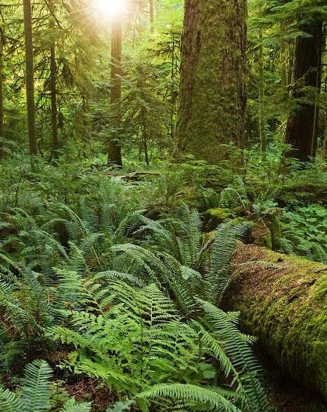 Plants native to the Pacific north coast:  red cedar, mose, sword fern, and lady fern