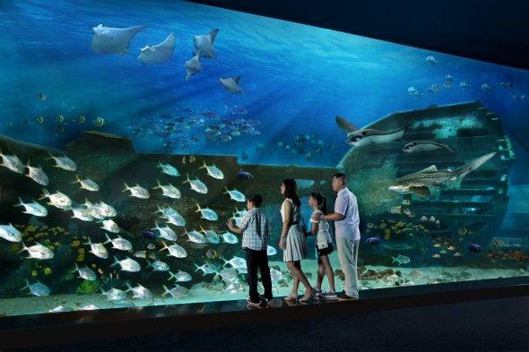 The world's largest oceanarium at Resorts World Sentosa. The Marine Life Park houses more than 100,000 marine animals from over 800 different species. #oceanarium