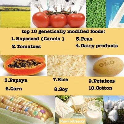 Poisoning animals, people and our planet.: Modified Food, Tops 10, Gmo Food, Healthy Eating, Genetics Modified, Healthy Lifestyle, Gm Food, Eating Clean, 10 Gmo