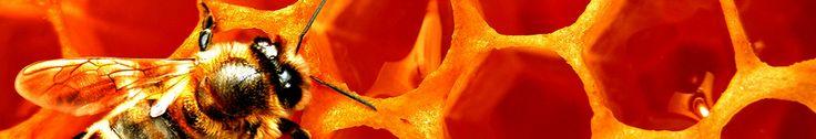 Apicoltura Laterza - Vendita Api Regine - Api regine ligustiche e buckfast - Pacchi d'api. Sono un Apicoltore professionista da circa 35 anni produco pacchi d'ape, api regine, Api Regine Ligustiche, Api Regine Buckfast, sciami e vendita miele all'ingrosso. Ho svariate migliaia di alveari, ho 3 Team di Apicoltori, uno si occupa di allevamento api regine, un altro si occupa della produzione di pacchi d'ape e sciami ed infine uno per la produzione di miele.Ho 15 lavoratori tra stagionali e non…