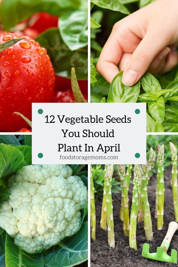 Are You Ready To Learn About The 12 Vegetable Seeds You Should