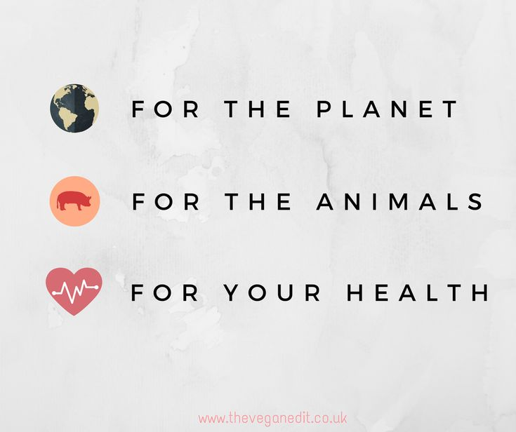animal facts lobsters vegan peace