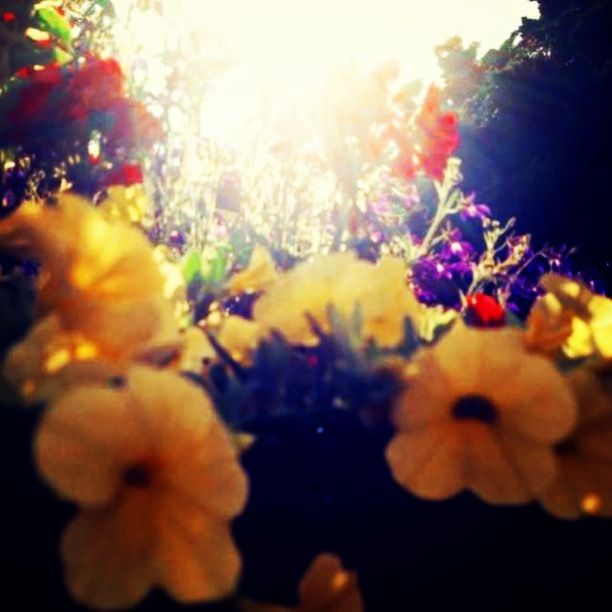 Dutchflowers