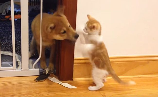 Daily Cute: Puppy and Kitten Engage in Epic Play Battle