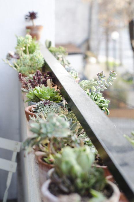 Cactus (Depto 51)