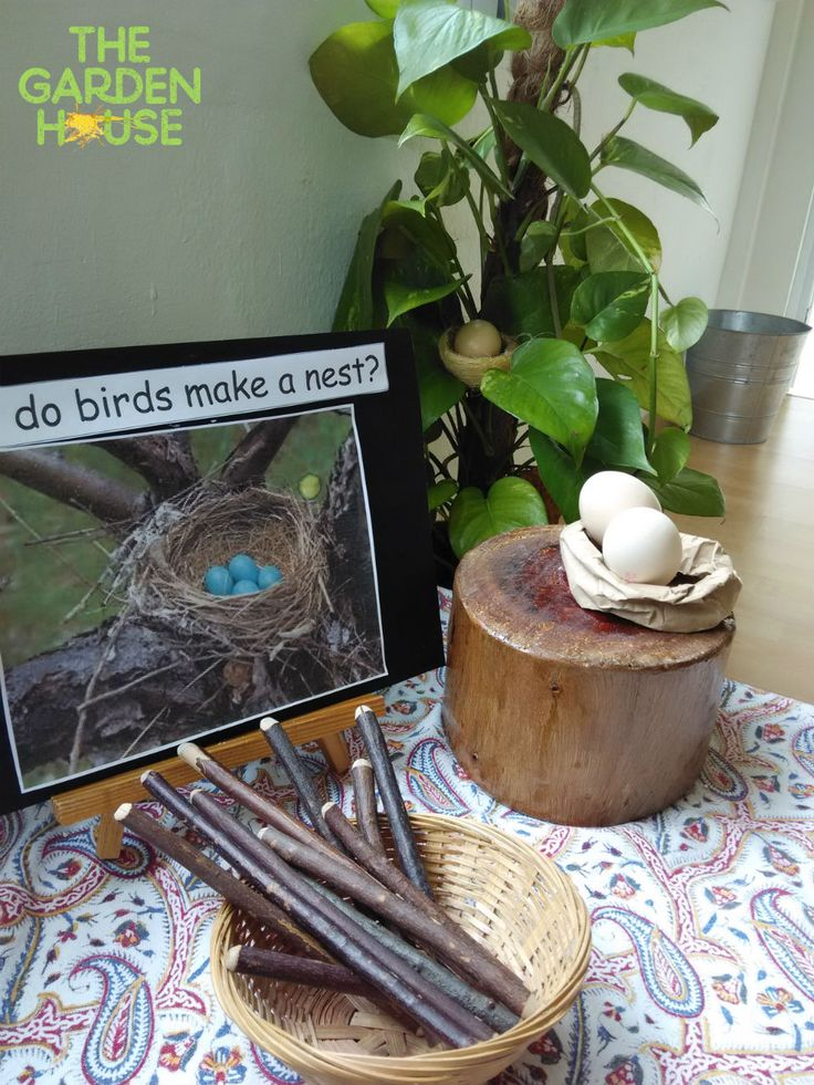 Birds, nests & eggs... how does a bird make a nest? (Play based learning, Reggio Inspired Preschool in Singapore - The Garden House)