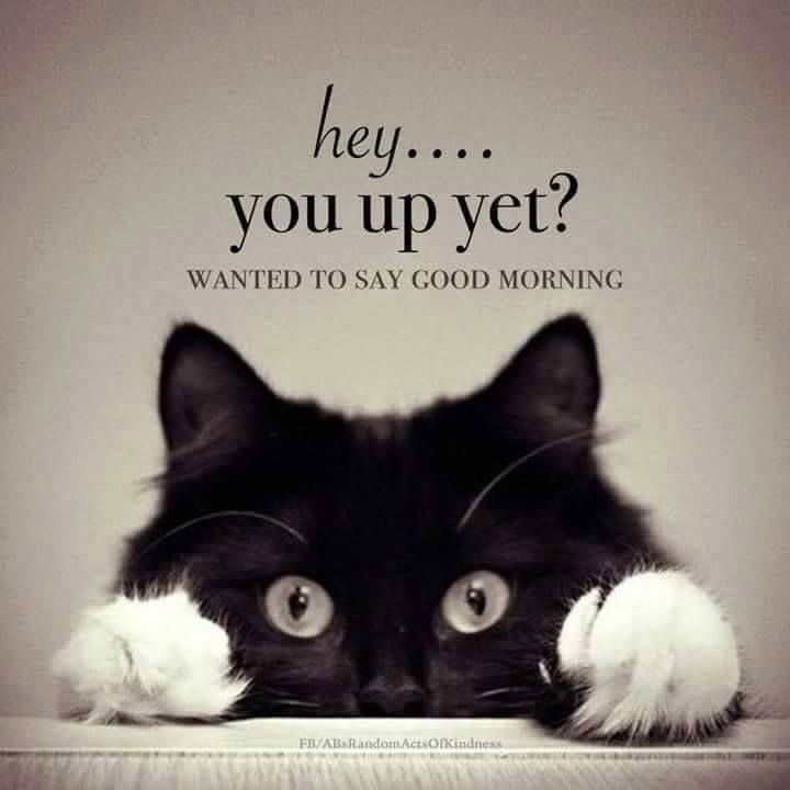 Hey.... you up yet? Omg so cute! So sending this to you some morning lol