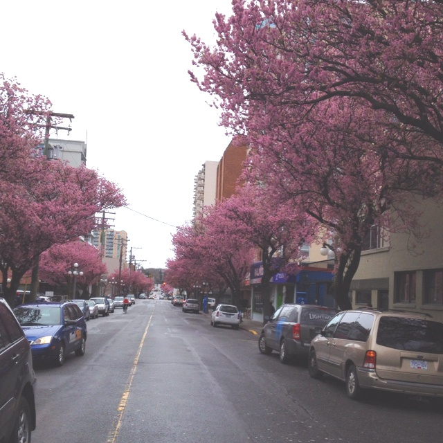 Spring is here in Victoria, BC