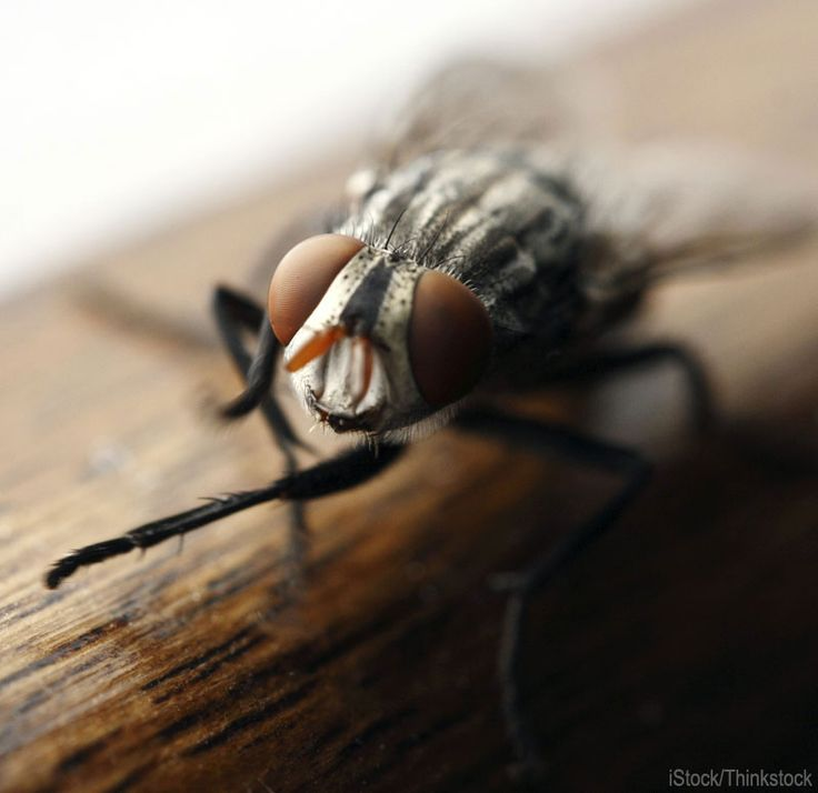 5 Home Pests and How to Repel Them Naturally Use essential oils and farm-grown herbs to make repellents for ants, flies, moths and other bug...