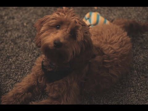 Best Dog Videos Images On Pinterest Dog Videos Hilarious - They gave this tiny dog some water balloons what happens next is hilarious
