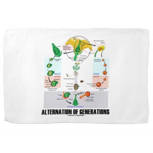 Alternation Of Generations (Flower Life Cycle) Towels #alternationofgenerations #flower #lifecycle #angiosperm #wordsandunwords #biology #biologist #botany #botanist  Kitchen towel featuring alternation of generations in an angiosperm.