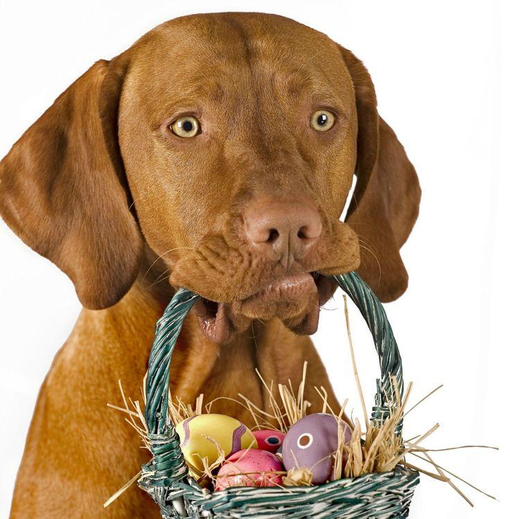 Osterwichteln_Titel_Hundeblog.jpg (1200×1222)