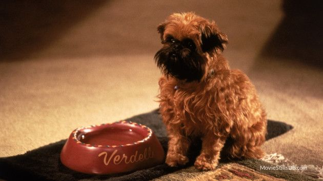 As Good As It Gets Publicity Still Dogs Good Things Get Movies