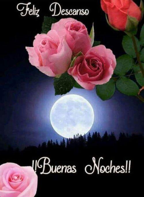 fotosde rosas