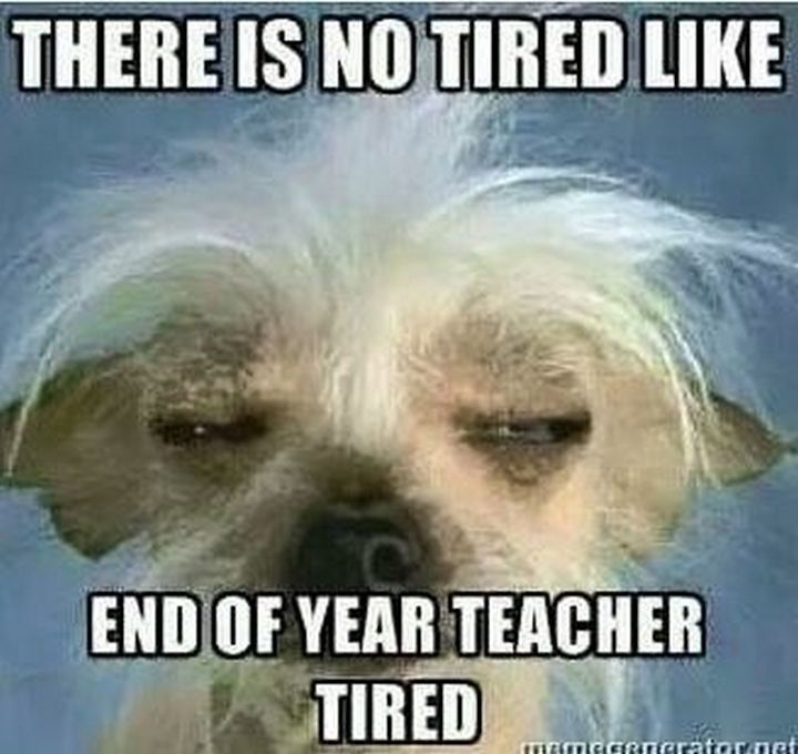 31 Hilarious School Memes That Looks About Right Teacher Tired Teacher Quotes Funny Teacher Humor