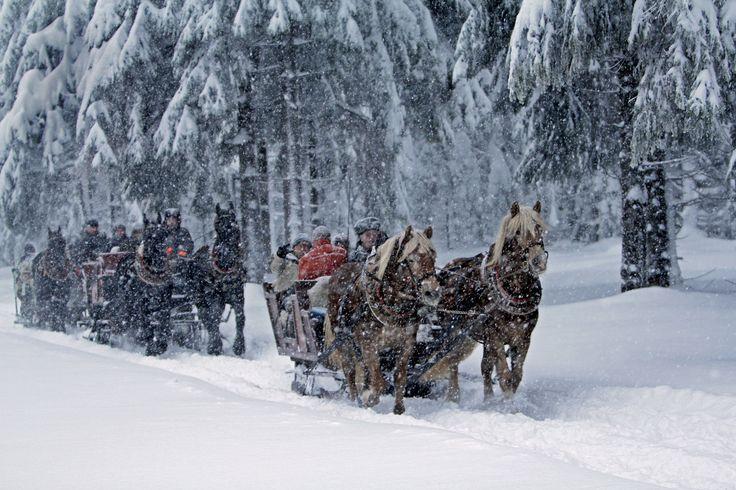 Pferdekutschfahrt durch den winterlichen Thüringer Wald.