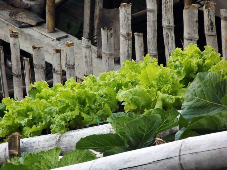La huerta de la finca. ¿Necesitas fotos como esta para el contenido de tu web? Visita: www.laweb.com.co/contenido-web/