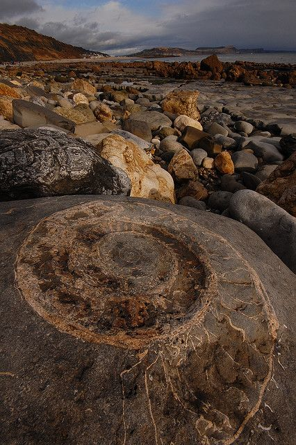 massive ammonite, Lyme Regis