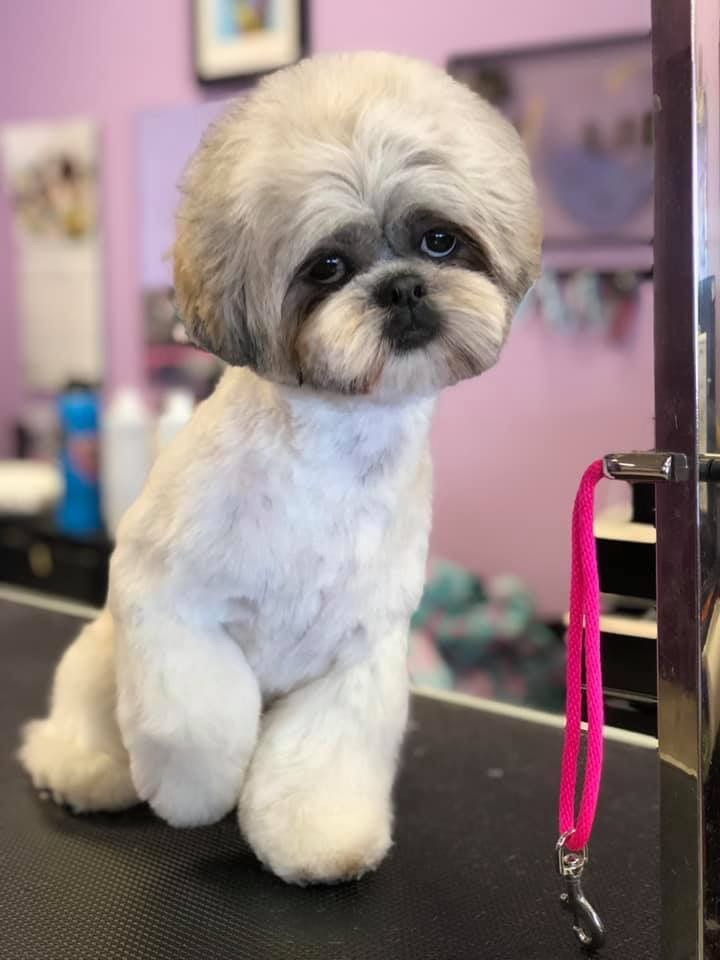 Pin By Kim Veilleux On Asian Fusion Grooming Puppy Grooming