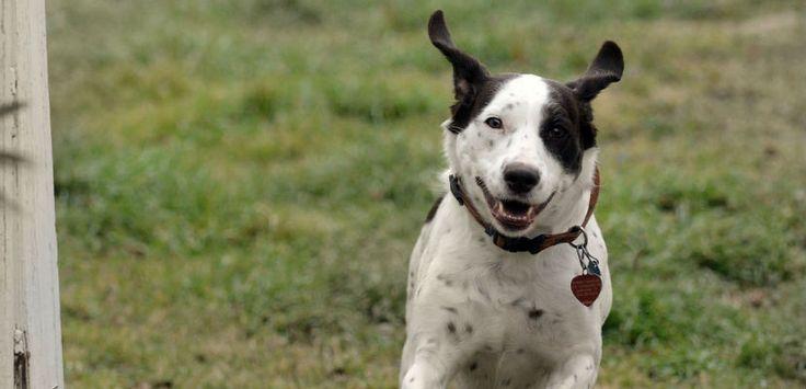 Medidas de prevención del cáncer en perros