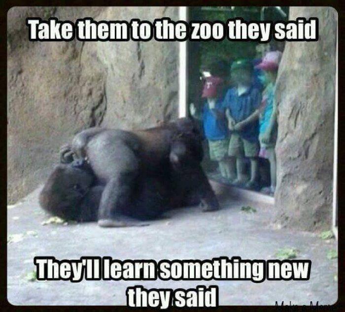Take them to the zoo they said - meme