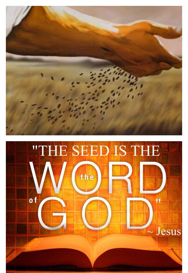 """Jesus said in Luke 8:11 - """"Now the parable is this: The seed is the word of God."""" See Luke 8:4-15 (He calls us to spread this seed.)"""