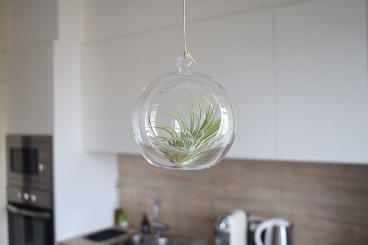 PHYT PLANTS / Airplants styling / now on www.CLOCLO.be