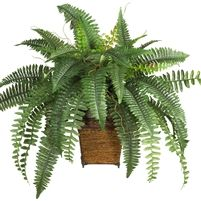 Boston Fern w/Wicker Basket Silk Plant Are you tired of the ordinary? Then spice up your decor with this wild and tropical Boston fern. A popular favorite of the Victorian era, this exotically crafted masterpiece brings back a forgotten age.