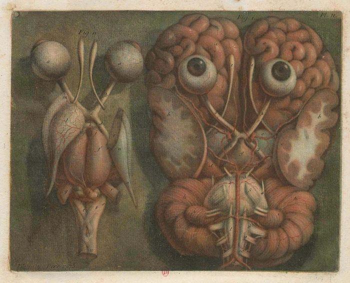 20 Best Anatomie Images On Pinterest Human Anatomy Anatomy And