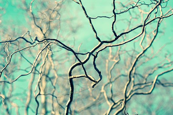 Sky  Photograph Willow Branches Tree Turquoise Sky  by JudyStalus: Tree Turquoise, Photograph Willow, Etsy Pieces, Photography Ideas, Sky Photograph