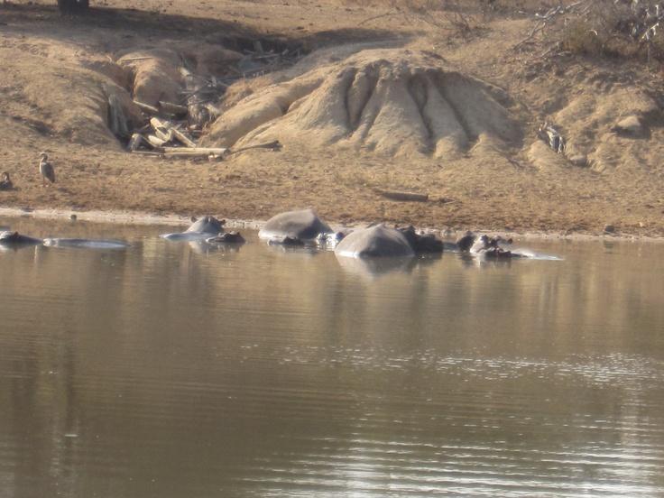 Nijlpaarden liggen lekker te soezen in de zon