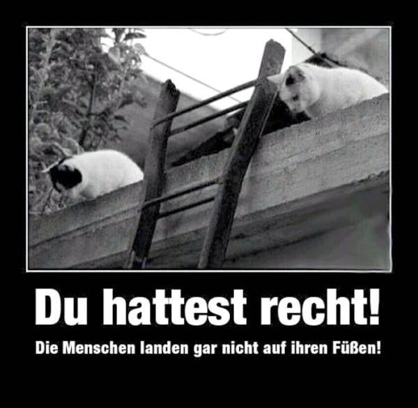 84 besten deutsch witze bilder auf pinterest deutsche witze lustige bilder und lustige spr che. Black Bedroom Furniture Sets. Home Design Ideas
