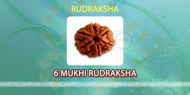 6 mukhi Rudraksh by Astrologer Rahul Kaushal ----------------------------------------------------------  It has 6 lines on it and is being considered as symbol of Lord Kartikya , son of Lord Shiva. It enhances education, brain and Knowledge. It gives strength in studying and it removes Kaam , Krodh, Lobh, Moh, Madh, and Matsar. It gives confidence, increase decision making, and Knowledge power and removes problems of skin, Heart and eyes too. http://www.pandit.com/6-mukhi-rudraksh/