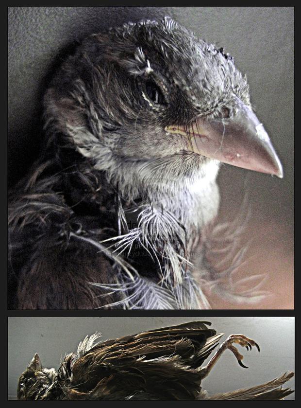 'Portrait of a Bird'