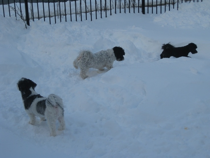 They love the snow