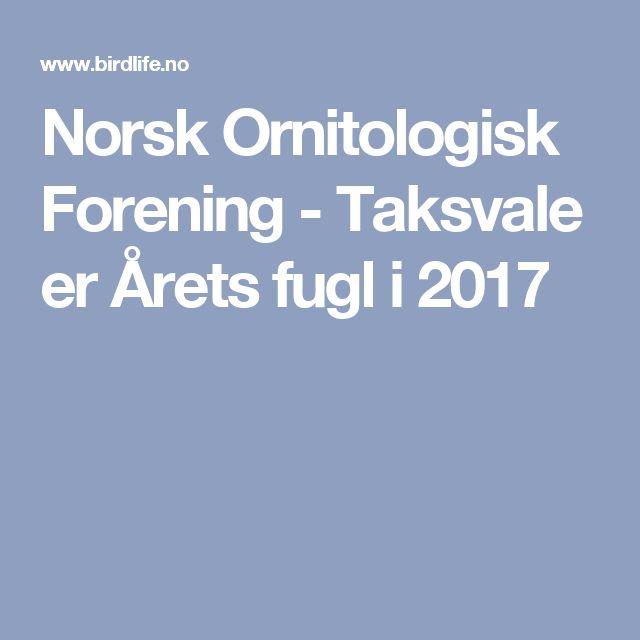 Norsk Ornitologisk Forening - Taksvale er Årets fugl i 2017