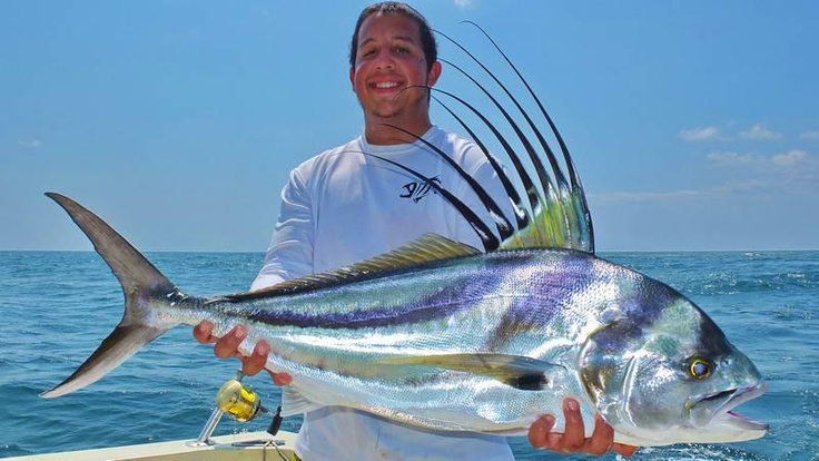 Rooster fish fb tropic star lodge liam lures pinterest for Rooster fish pictures