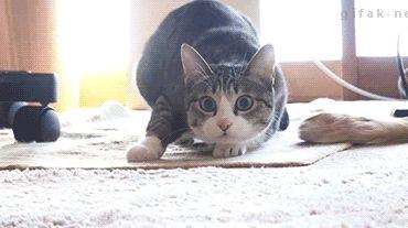 This GIF of Dancing Shaq vs Dancing Cat is perfect Internet - SBNation.com