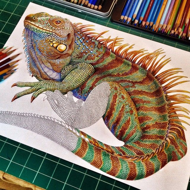 """About 500 scales to go! Thanks so much for looking. This has been on of my most ambitious reptile drawing yet. #iguana #instago #instaart #instaarty…"""
