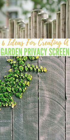 6 Ideas For Creating A Garden Privacy Screen — For most people who garden, it is a time of relaxation while being productive and a place to come and sit, enjoying the sight of the result of their hard work while having a cool drink and feeling the sun on their face.