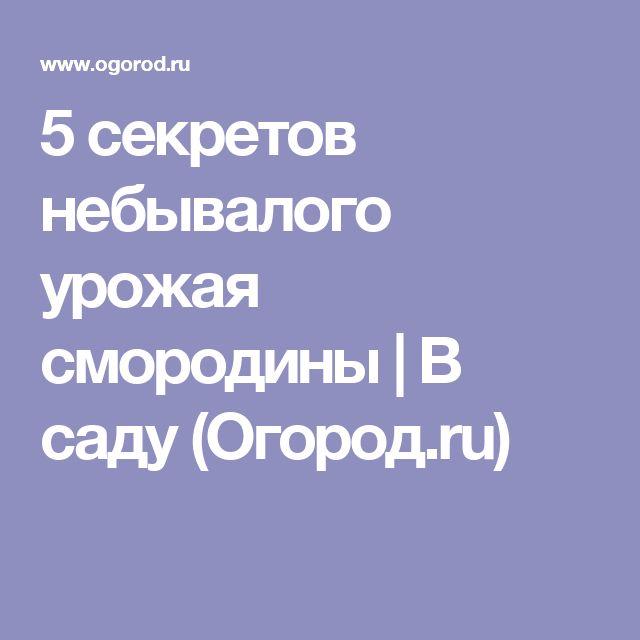 5 секретов небывалого урожая смородины | В саду (Огород.ru)